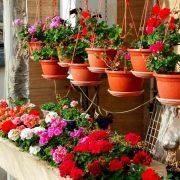 گل مناسب برای تراس