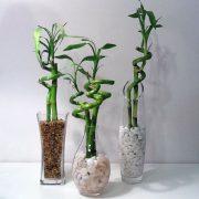 گلدان شیشه ای بامبو