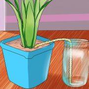 آبیاری گیاهان در هنگام مسافرت